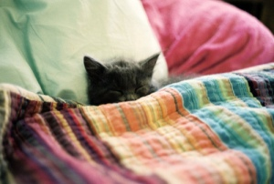 kitten-under-covers