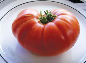 large-tomato